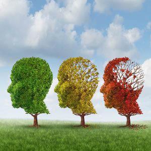 Brain Aging Graphic