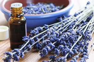 lavender sprigs and oil
