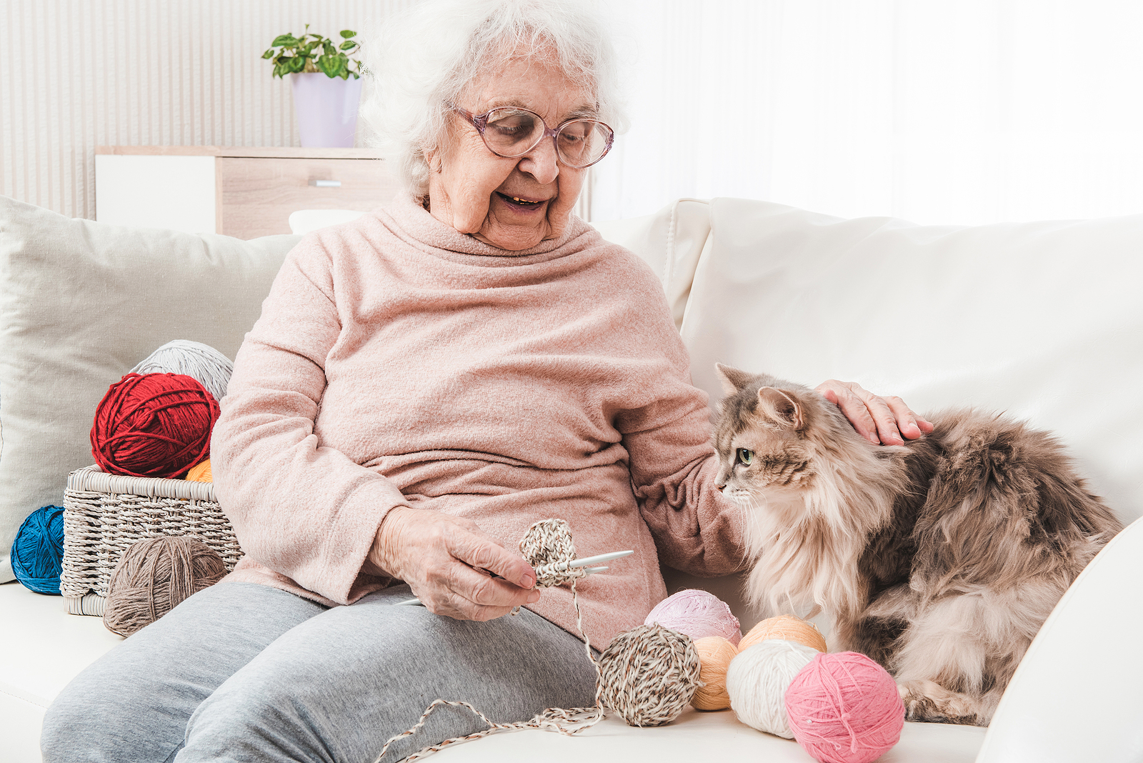 Home Care Assistance in Harrison NY